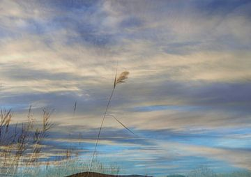 Halme im Wind van Peter Norden
