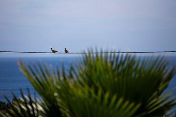 Twee duiven van Jelmer Reyntjes