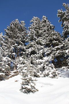Zwitsers winterlandschap von Patsy Van den Broeck