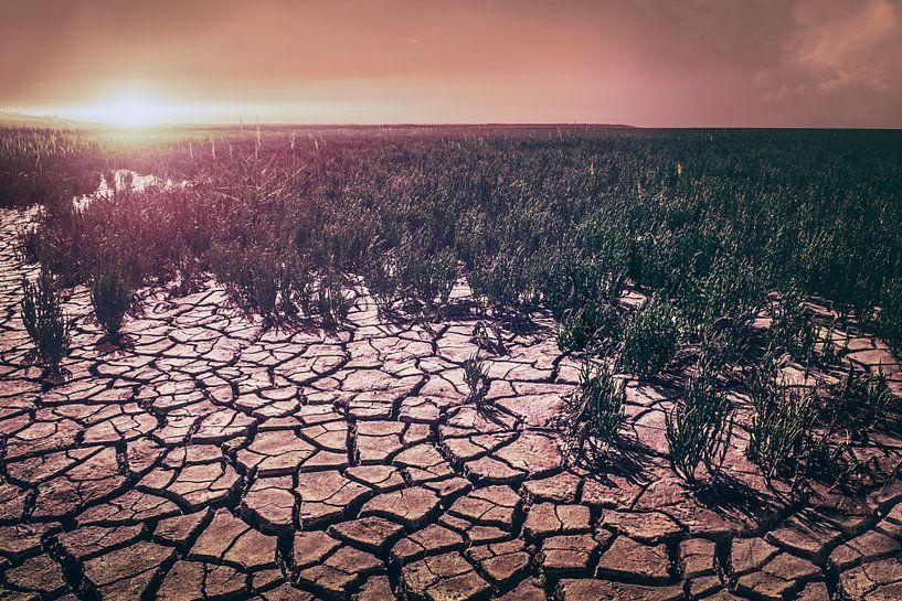 De droogte in Nederland 2018 van Elianne van Turennout