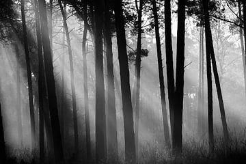 Sonnenschein durch den Kiefernwald von Bert Kok