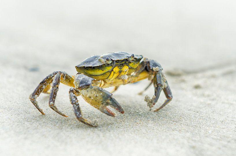 Krab op het strand van Mark Bolijn