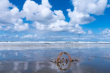 reflectie op een helder strand aan zee  van Tjiske Regnerus