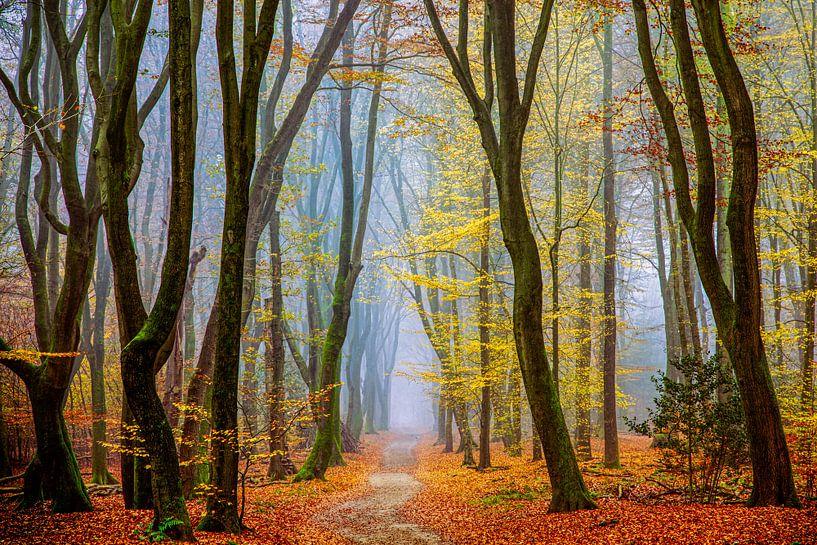 Herfst in Nederland van Lars van de Goor