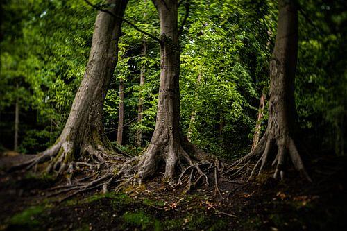 Natuurfoto van oude bomen in een typisch Hollands park