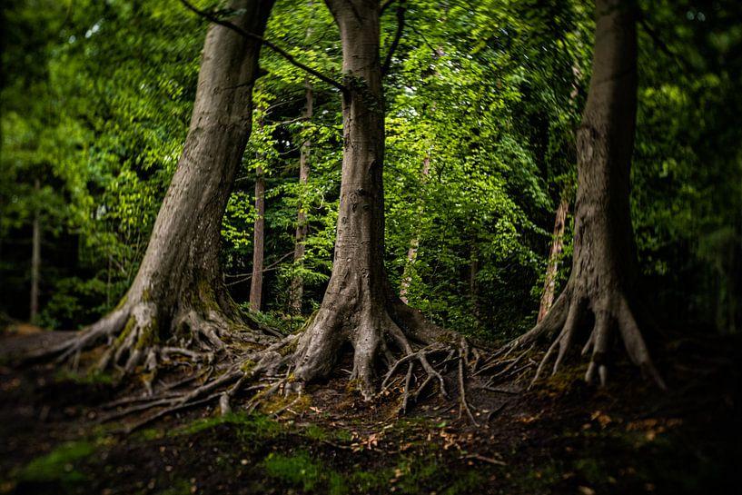 Natuurfoto van oude bomen in een typisch Hollands park van MICHEL WETTSTEIN