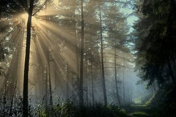 Einen neuen Tag begrüßt der Herbst sur bernd hiep