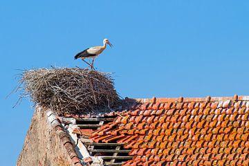 Ooievaar staat in nest op dak  van Ben Schonewille