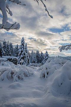 Les merveilles de l'hiver dans le jardin sur Martin Steiner