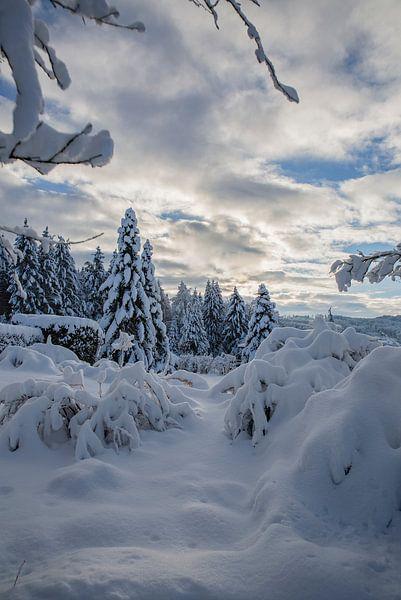 Winterwunderland im Garten von Martin Steiner