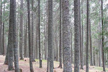 Wald von Florian Kampes