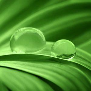 Grün van