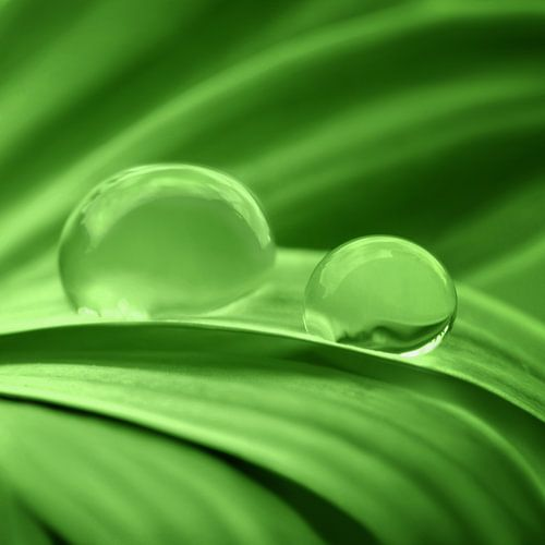 Grün von Violetta Honkisz