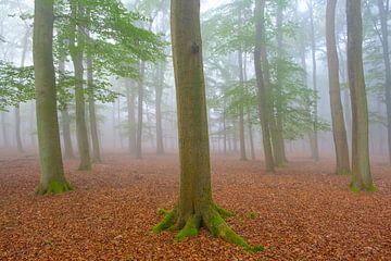 Nebliger Morgen im Wald von Leuvenum in der Natur der Veluwe von Sjoerd van der Wal