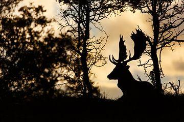 Fallow deer @ sunset von Pim Leijen