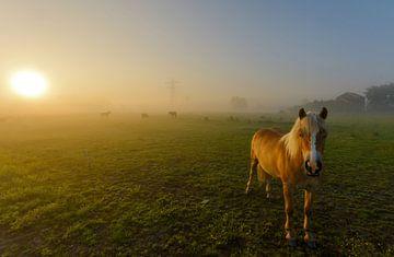 Paard in mistig landschap sur