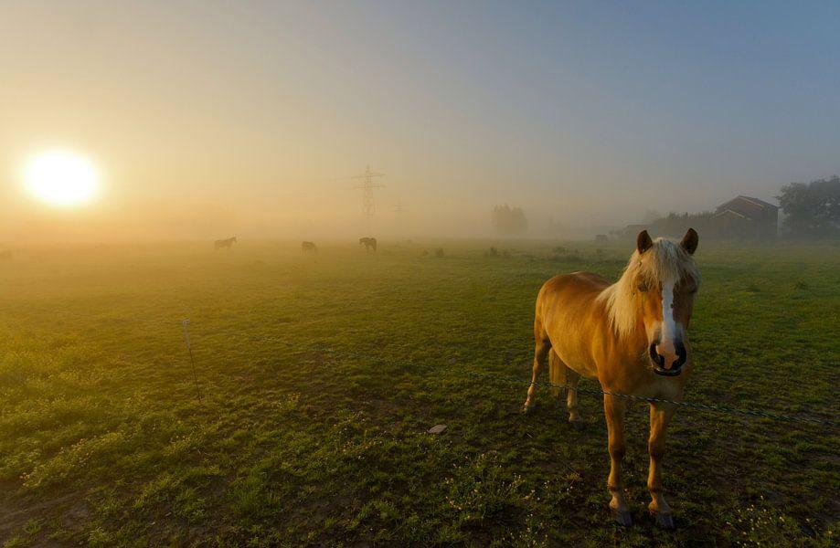 Paard in mistig landschap