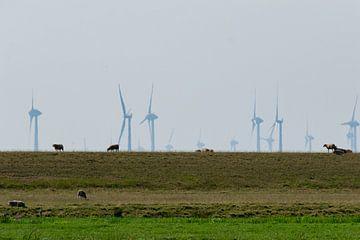 Schafe auf dem friesischen Deich von Eline Bouwman