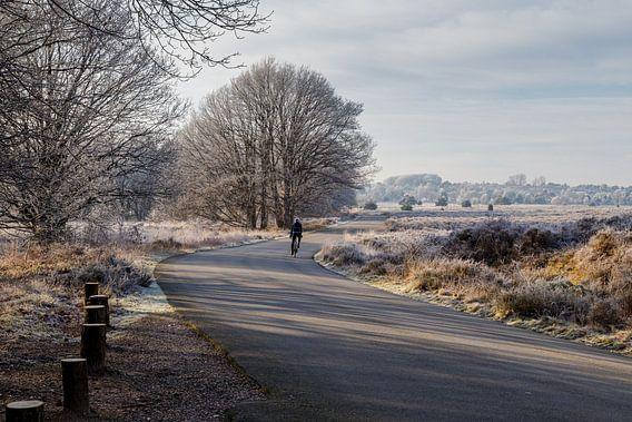 Paysage gelé en hiver