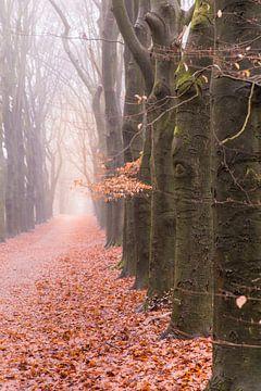 Waldweg an einem nebligen Wintermorgen von Mayra Pama-Luiten