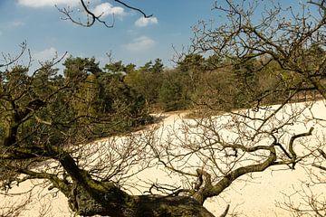 Drunen-Dünen bei Giersbergen 6 von Carin IJpelaar