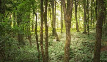 L'été dans la forêt