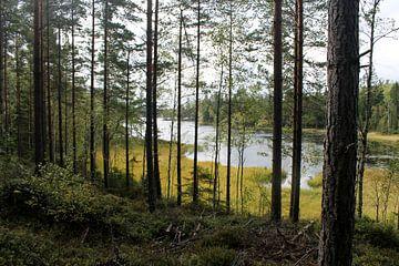 Image suédoise sur Naomi Kroon