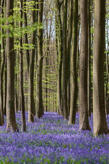 Haller forest