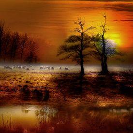 Schafe weiden auf einer Wiese im Sonnenuntergang von Peter Roder