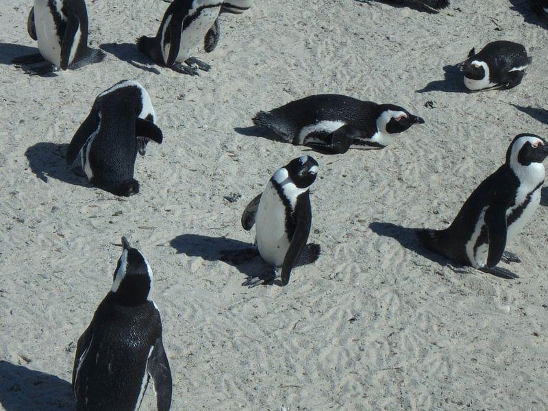 Pinguïns van Robin van Tilborg