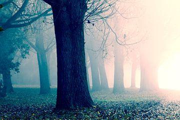 Ochtendzon, mist en bomen van