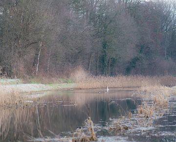 winter op het water van Tania Perneel