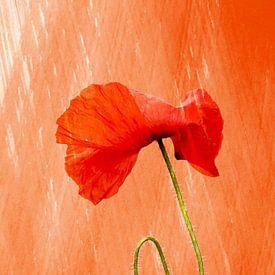 klaproos OranjeBoven van Yvonne Blokland