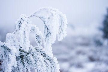 Winter im Wald, Pflanze bedeckt mit Schneeflocken von Karijn Seldam