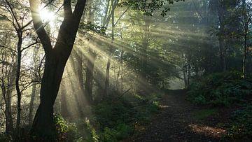 Nebel Im Wald von Daphne Photography