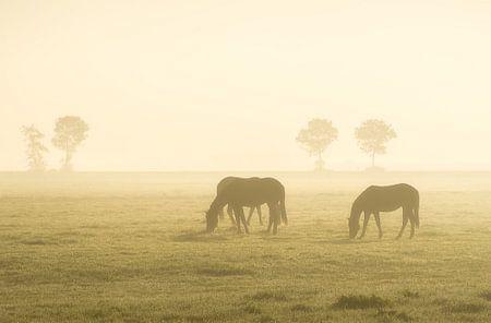 Paarden bij zonsopkomst