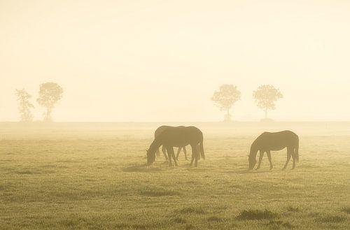 Paarden bij zonsopkomst van Roelof Nijholt