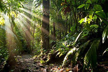 Sonnenstrahlen im Dschungel von Costa Rica von Peter Schickert