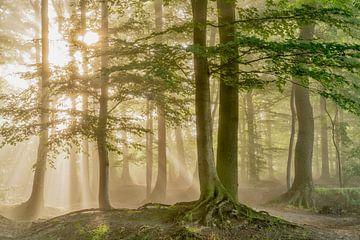 Morning Bliss van Lars van de Goor