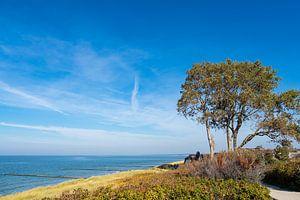 Ostseeküste auf dem Fischland-Darß in Ahrenshoop