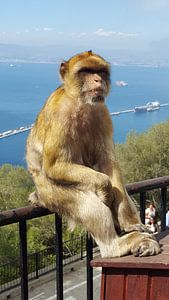Chilling monkey van