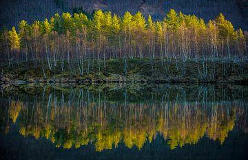 Reflectie in water. Lofoten, Noorwegen van Floris Heuer