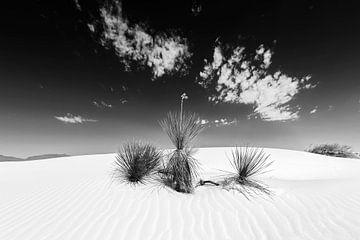 White Sands Impression | Monochrom von Melanie Viola
