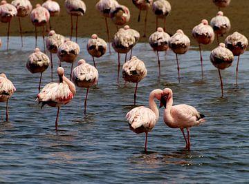 Roze flamingo's von Roos Vogelzang
