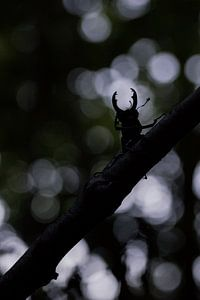 i see a little silhouetto of a beetle