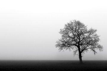 Eenzame boom in de Mist von Jeffrey Van Zandbeek