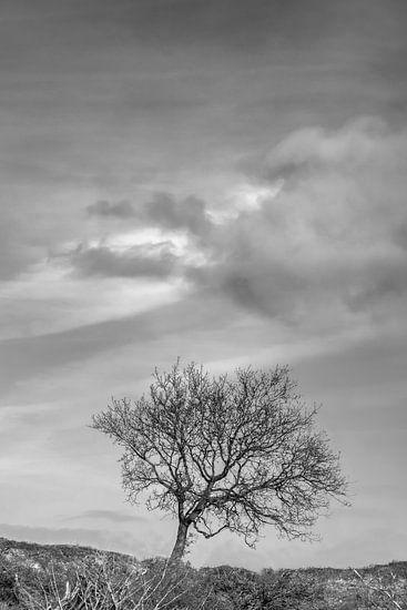 Eenzame boom (zwart wit) van Jacqueline de Groot