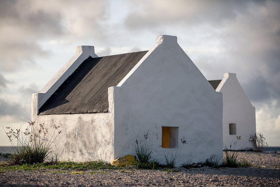 'White Slave', Bonaire van Martijn Smeets
