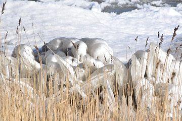 ijspegels3 van Annemarie Kroon