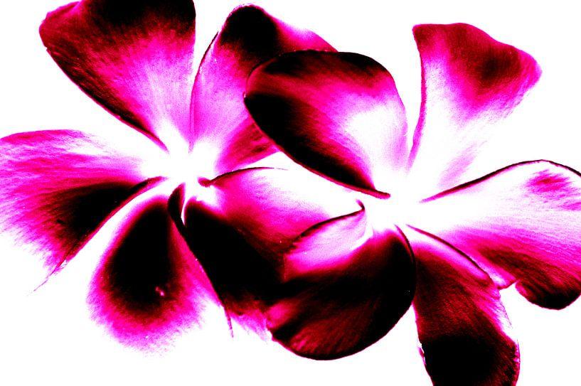 Purple Twins van Ernst van Voorst